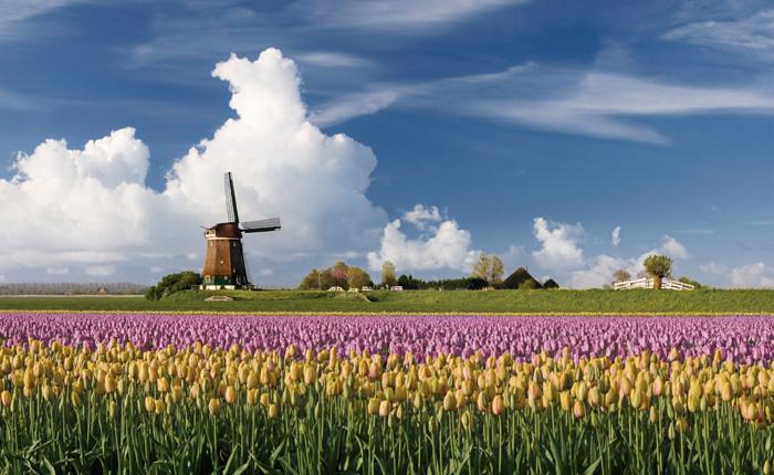 Havo Nederlands
